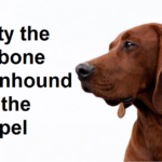 Rusty the Redbone Coonhound and the Gospel