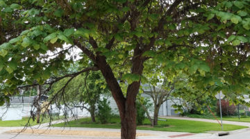 Robins in a Tree: A Word to Women Contemplating Abortion